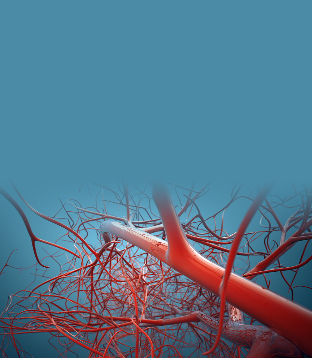Division of Vascular & Endovascular Surgery